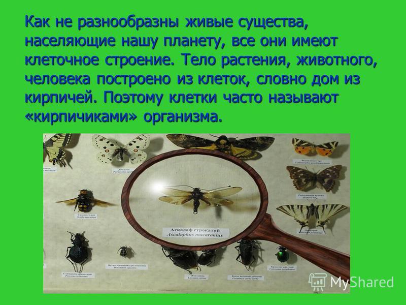 Как не разнообразны живые существа, населяющие нашу планету, все они имеют клеточное строение. Тело растения, животного, человека построено из клеток, словно дом из кирпичей. Поэтому клетки часто называют «кирпичиками» организма.