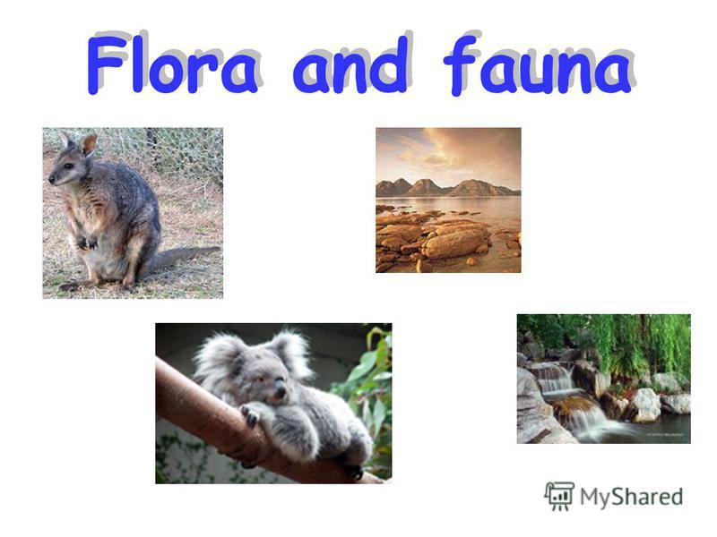 Flora and fauna Flora and fauna