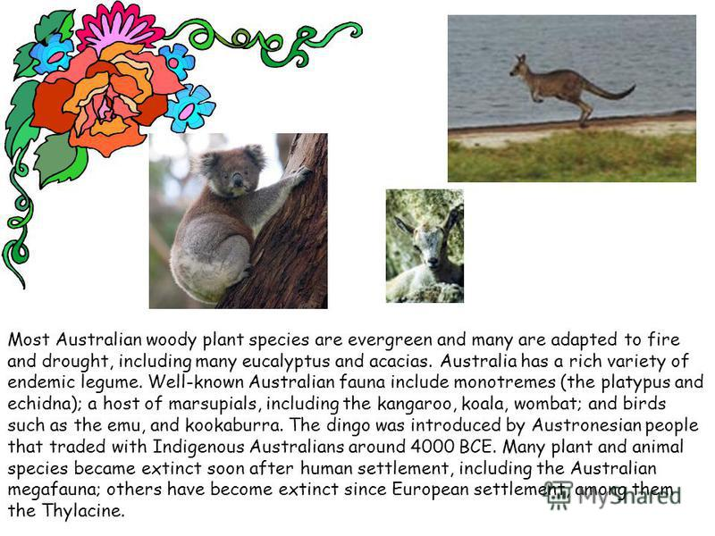 Most Australian woody plant species are evergreen and many are adapted to fire and drought, including many eucalyptus and acacias. Australia has a rich variety of endemic legume. Well-known Australian fauna include monotremes (the platypus and echidn