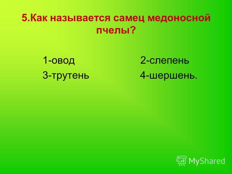 5. Как называется самец медоносной пчелы? 1-овод 2-слепень 3-трутень 4-шершень.