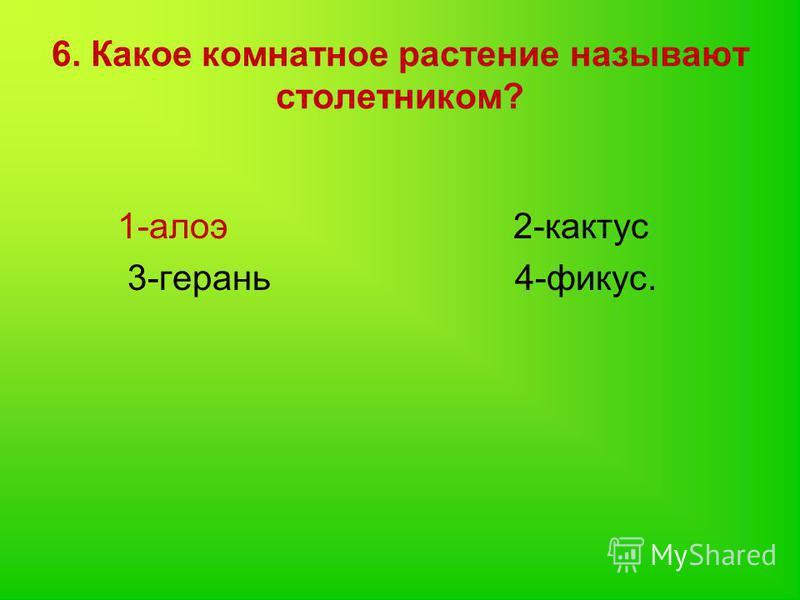 6. Какое комнатное растение называют столетником? 1-алоэ 2-кактус 3-герань 4-фикус.