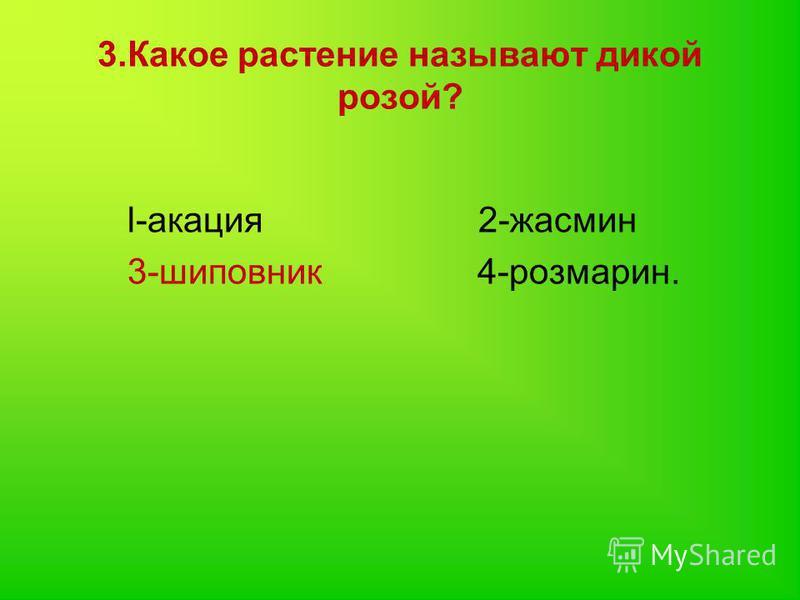 3. Какое растение называют дикой розой? l-акация 2-жасмин 3-шиповник 4-розмарин.