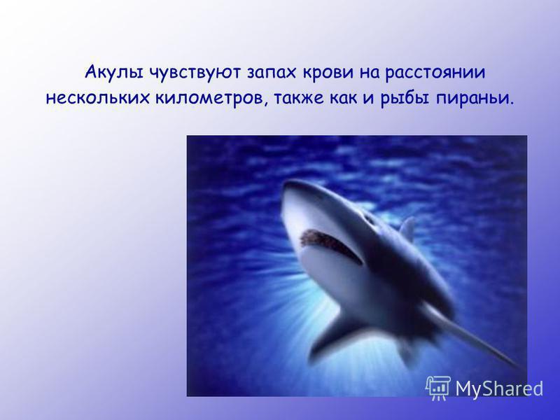 Акулы чувствуют запах крови на расстоянии нескольких километров, также как и рыбы пираньи.