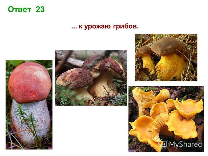 Ответ 23... к урожаю грибов.