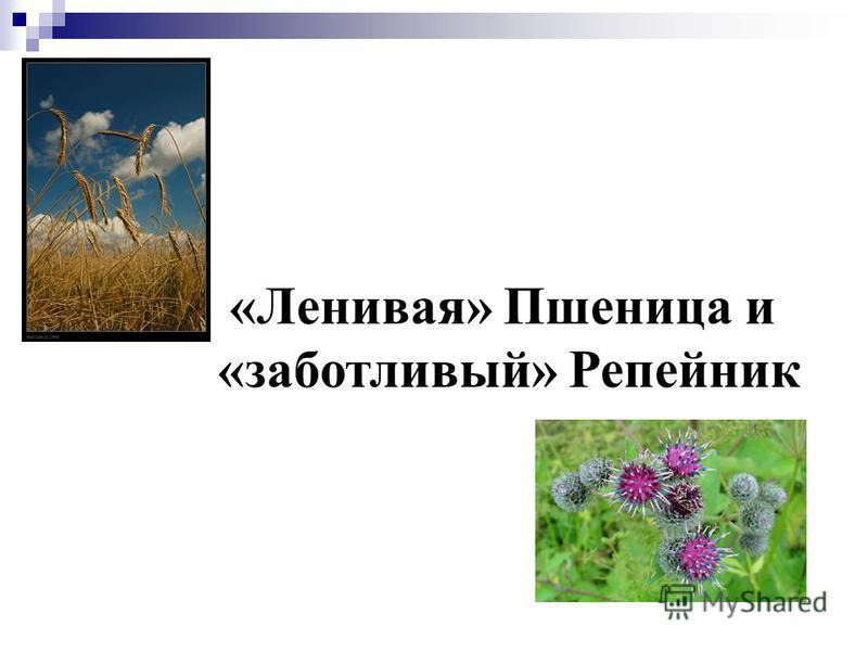 «Ленивая» Пшеница и «заботливый» Репейник