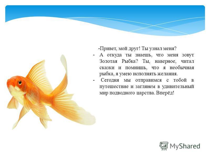 -Привет, мой друг! Ты узнал меня? -А откуда ты знаешь, что меня зовут Золотая Рыбка? Ты, наверное, читал сказки и помнишь, что я необычная рыбка, я умею исполнять желания. - Сегодня мы отправимся с тобой в путешествие и заглянем в удивительный мир по