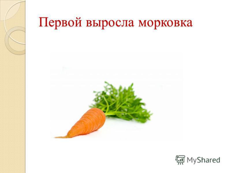 Первой выросла морковка