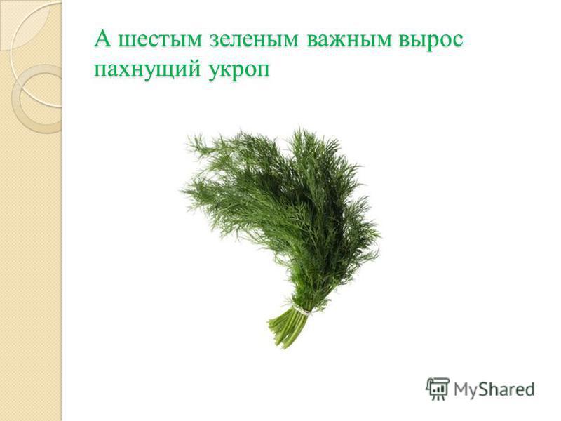 А шестым зеленым важным вырос пахнущий укроп