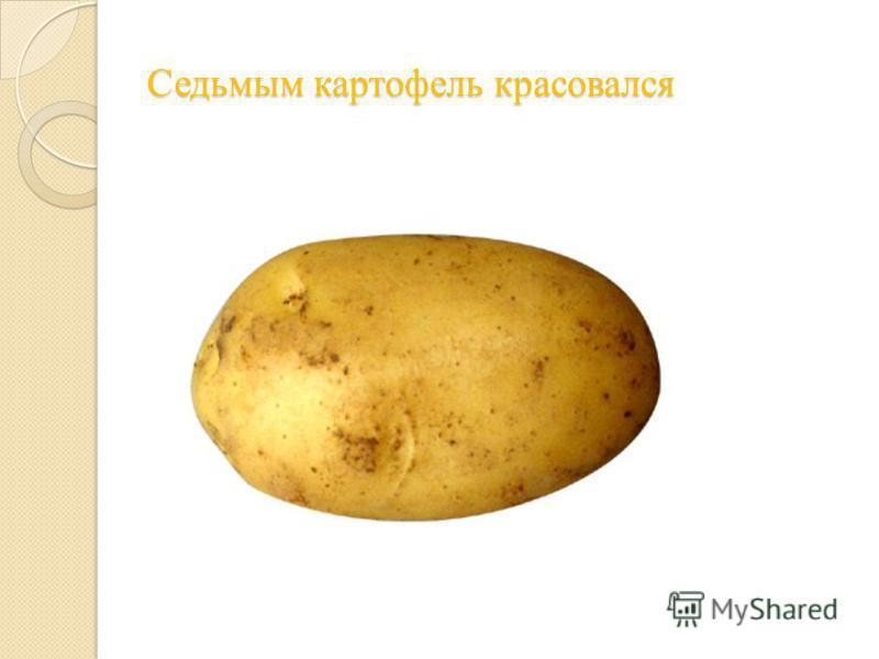 Седьмым картофель красовался