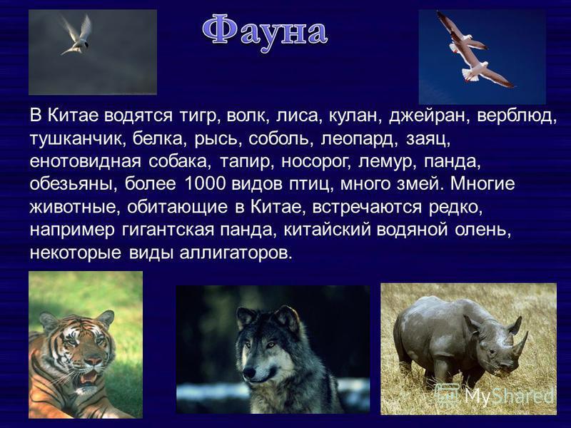 В Китае водятся тигр, волк, лиса, кулан, джейран, верблюд, тушканчик, белка, рысь, соболь, леопард, заяц, енотовидная собака, тапир, носорог, лемур, панда, обезьяны, более 1000 видов птиц, много змей. Многие животные, обитающие в Китае, встречаются р