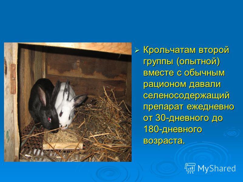 Крольчатам второй группы (опытной) вместе с обычным рационом давали селено содержащий препарат ежедневно от 30-дневного до 180-дневного возраста. Крольчатам второй группы (опытной) вместе с обычным рационом давали селено содержащий препарат ежедневно