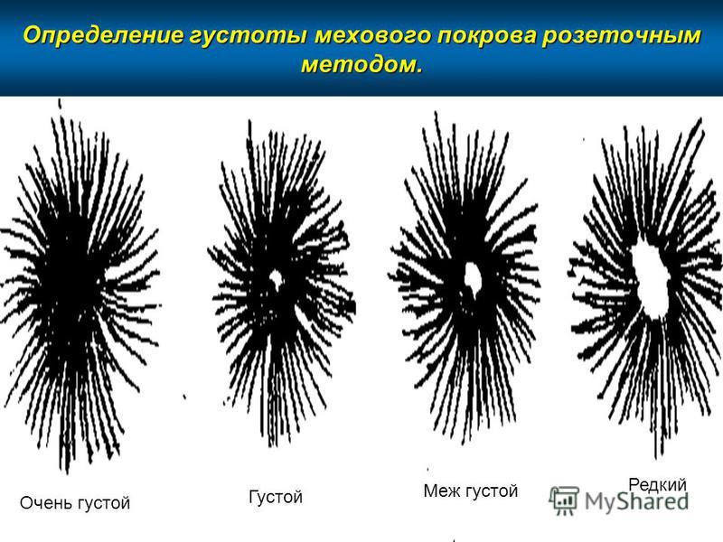 Определение густоты мехового покрова розеточным методом. Очень густой Густой Меж густой Редкий