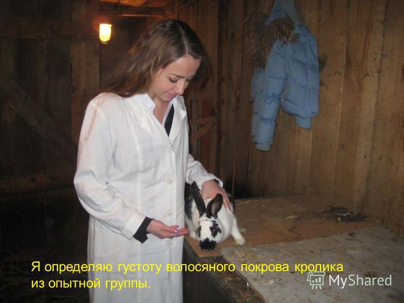 Я определяю густоту волосяного покрова кролика из опытной группы.
