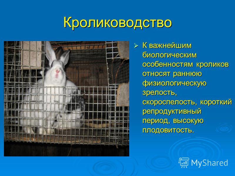 Кролиководство К важнейшим биологическим особенностям кроликов относят раннюю физиологическую зрелость, скороспелость, короткий репродуктивный период, высокую плодовитость. К важнейшим биологическим особенностям кроликов относят раннюю физиологическу