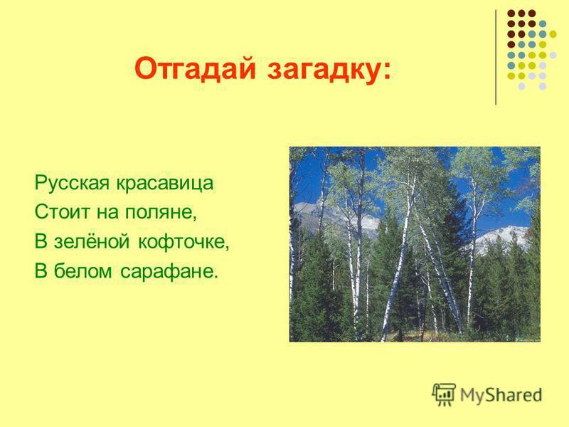 Отгадай загадку: Русская красавица Стоит на поляне, В зелёной кофточке, В белом сарафане.