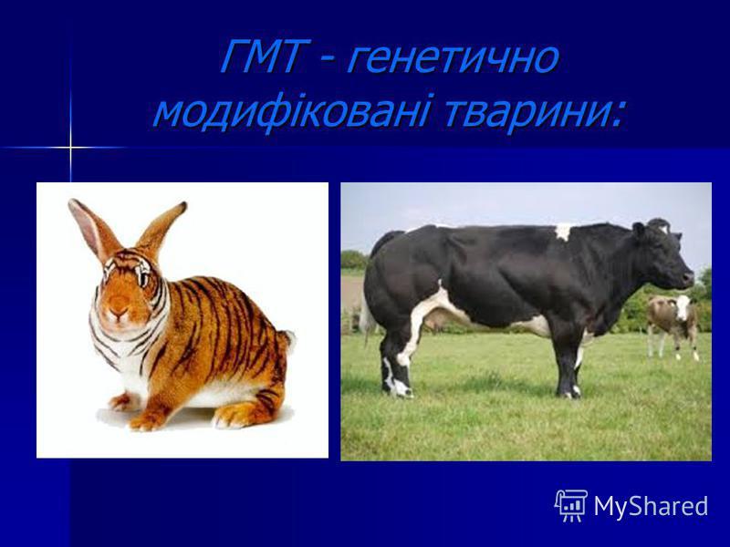 ГМТ - генетично модифіковані тварини: