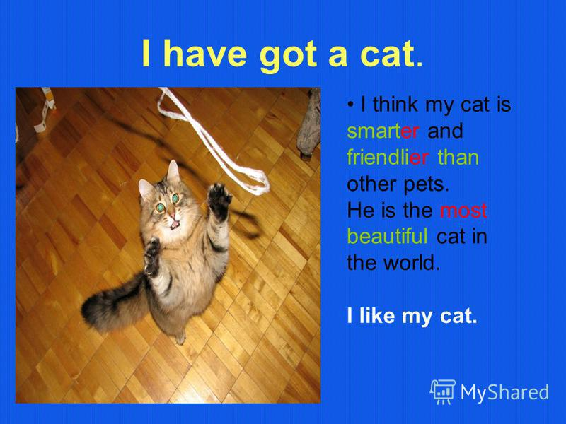 I have got a cat. I think my cat is smarter and friendlier than other pets. He is the most beautiful cat in the world. I like my cat.
