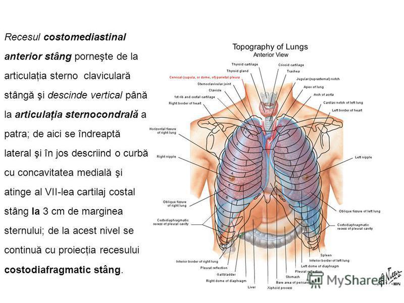 Recesul costomediastinal anterior stâng porneşte de la articulaţia sterno  claviculară stângă şi descinde vertical până la articulaţia sternocondrală a patra; de aici se îndreaptă lateral şi în jos descriind o curbă cu concavitatea medială şi atinge