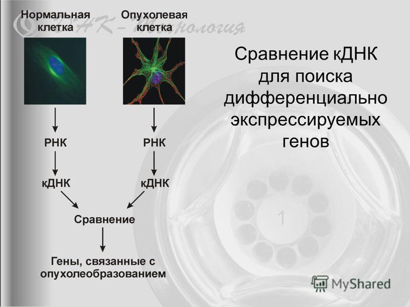 Сравнение кДНК для поиска дифференциально экспрессируемых генов