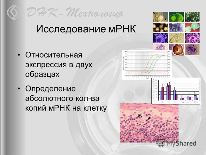 Исследование мРНК Относительная экспрессия в двух образцах Определение абсолютного кол-ва копий мРНК на клетку