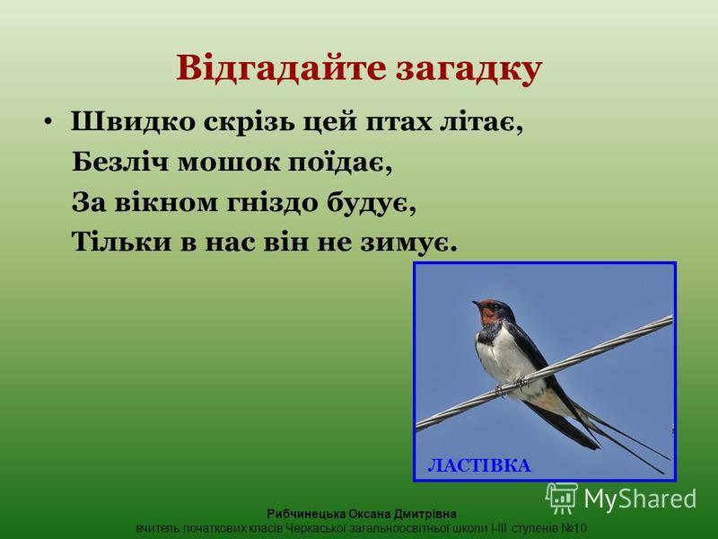 Відгадайте загадку Швидко скрізь цей птах літає, Безліч мошок поїдає, За вікном гніздо будує, Тільки в нас він не зимує. ЛАСТІВКА Рибчинецька Оксана Дмитрівна вчитель початкових класів Черкаської загальноосвітньої школи І-ІІІ ступенів 10