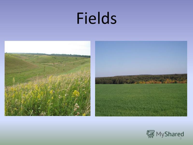 Fields 9