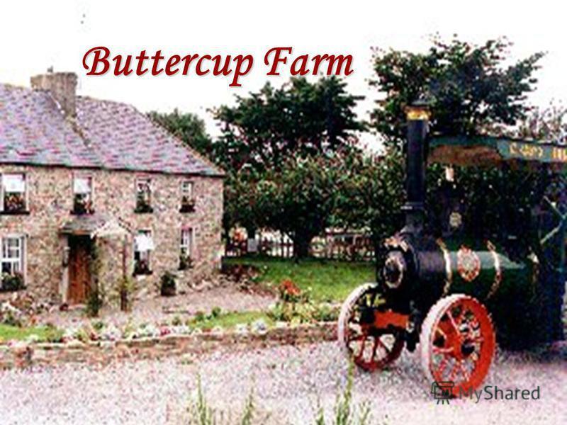 Buttercup Farm Buttercup Farm
