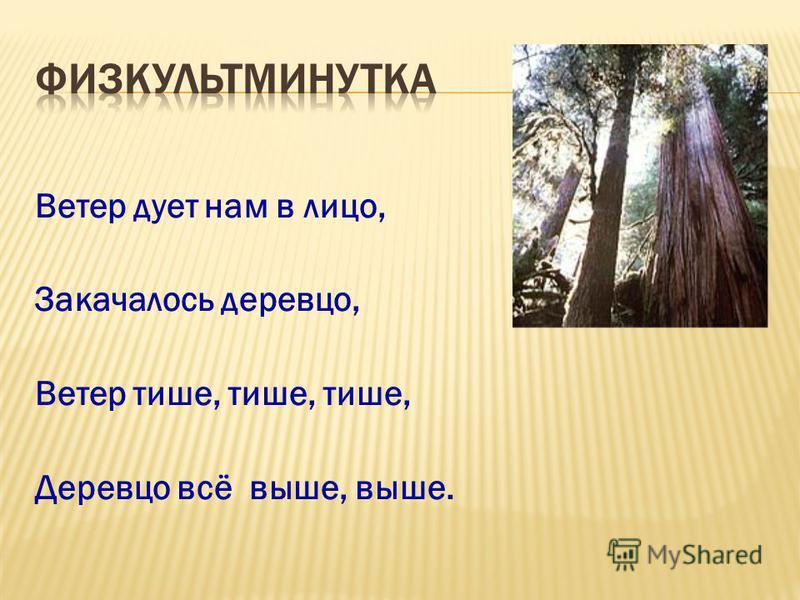 Ветер дует нам в лицо, Закачалось деревцо, Ветер тише, тише, тише, Деревцо всё выше, выше.