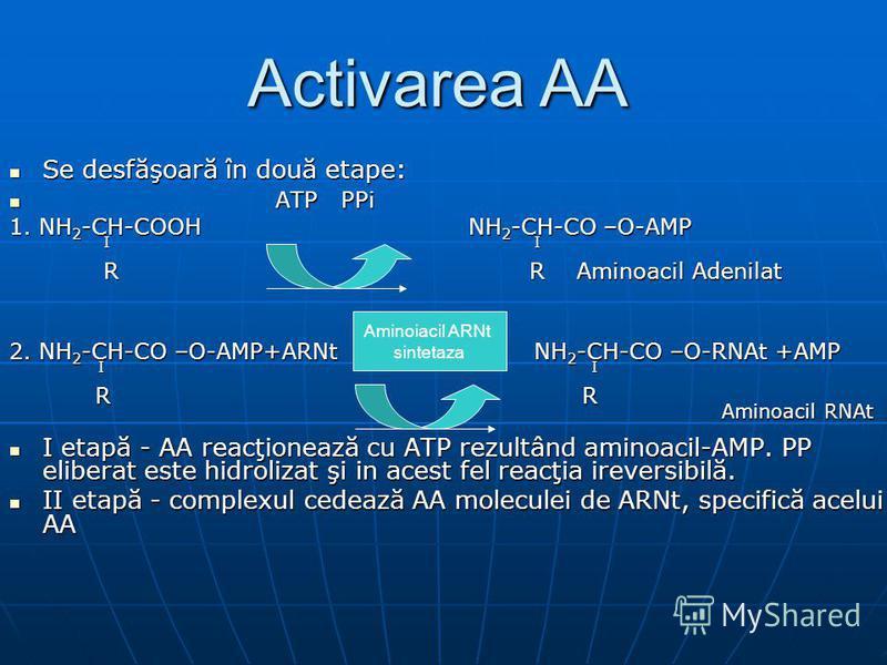 Se desfăşoară în două etape: Se desfăşoară în două etape: ATP PPi ATP PPi 1. NH 2 -CH-COOH NH 2 -CH-CO –O-AMP I I I I R R Aminoacil Adenilat R R Aminoacil Adenilat 2. NH 2 -CH-CO –O-AMP+ARNt NH 2 -CH-CO –O-RNAt +AMP I I I I R R R R Aminoacil RNAt Ami