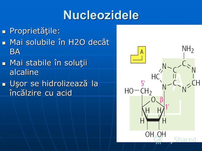 Nucleozidele Proprietăţile: Proprietăţile: Mai solubile în H2O decât BA Mai solubile în H2O decât BA Mai stabile în soluţii alcaline Mai stabile în soluţii alcaline Uşor se hidrolizează la încălzire cu acid Uşor se hidrolizează la încălzire cu acid