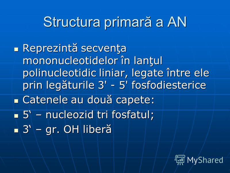 Structura primară a AN Reprezintă secvenţa mononucleotidelor în lanţul polinucleotidic liniar, legate între ele prin legăturile 3' - 5' fosfodiesterice Reprezintă secvenţa mononucleotidelor în lanţul polinucleotidic liniar, legate între ele prin legă
