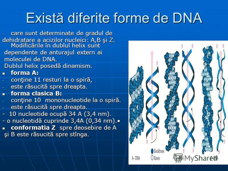 Există diferite forme de DNA - care sunt determinate de gradul de dehidratare a acizilor nucleici: A,B şi Z. Modificările în dublul helix sunt dependente de anturajul extern ai dependente de anturajul extern ai moleculei de DNA. moleculei de DNA. Dub
