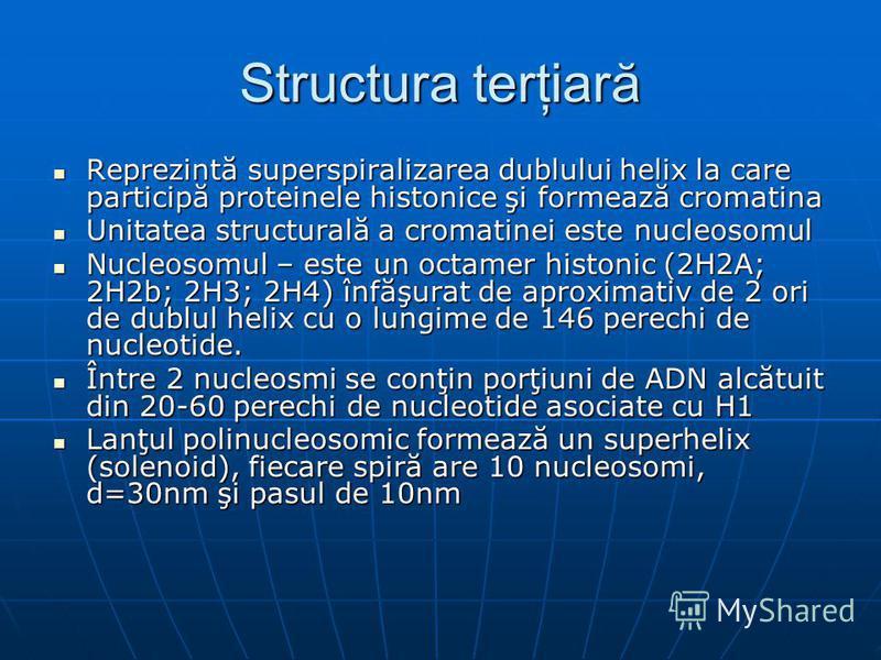 Structura terţiară Reprezintă superspiralizarea dublului helix la care participă proteinele histonice şi formează cromatina Reprezintă superspiralizarea dublului helix la care participă proteinele histonice şi formează cromatina Unitatea structurală