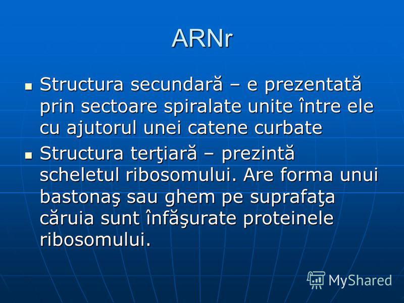 ARNr Structura secundară – e prezentată prin sectoare spiralate unite între ele cu ajutorul unei catene curbate Structura secundară – e prezentată prin sectoare spiralate unite între ele cu ajutorul unei catene curbate Structura terţiară – prezintă s
