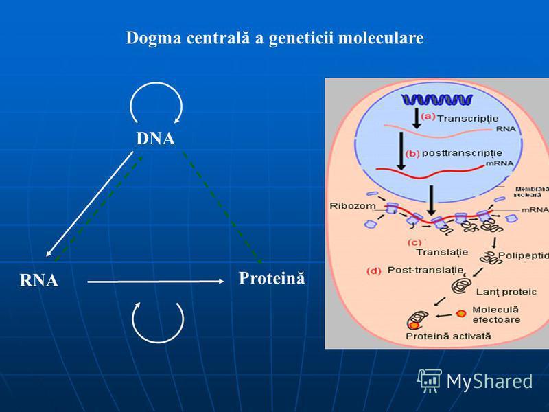 Dogma centrală a geneticii moleculare DNA RNA Proteină