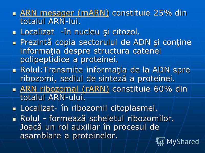 ARN mesager (mARN) constituie 25% din totalul ARN-lui. ARN mesager (mARN) constituie 25% din totalul ARN-lui. Localizat -în nucleu şi citozol. Localizat -în nucleu şi citozol. Prezintă copia sectorului de ADN şi conţine informaţia despre structura ca