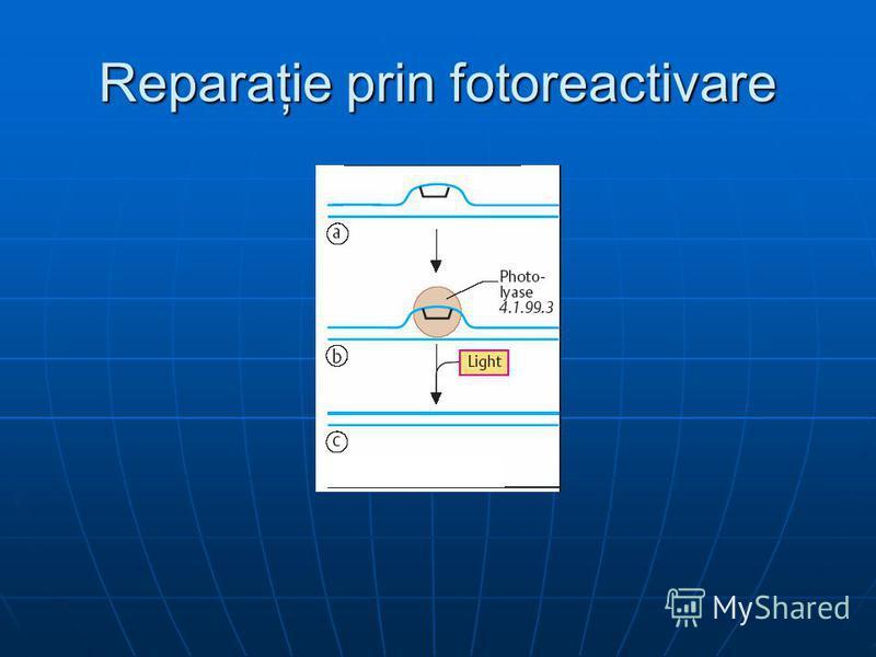 Reparaţie prin fotoreactivare