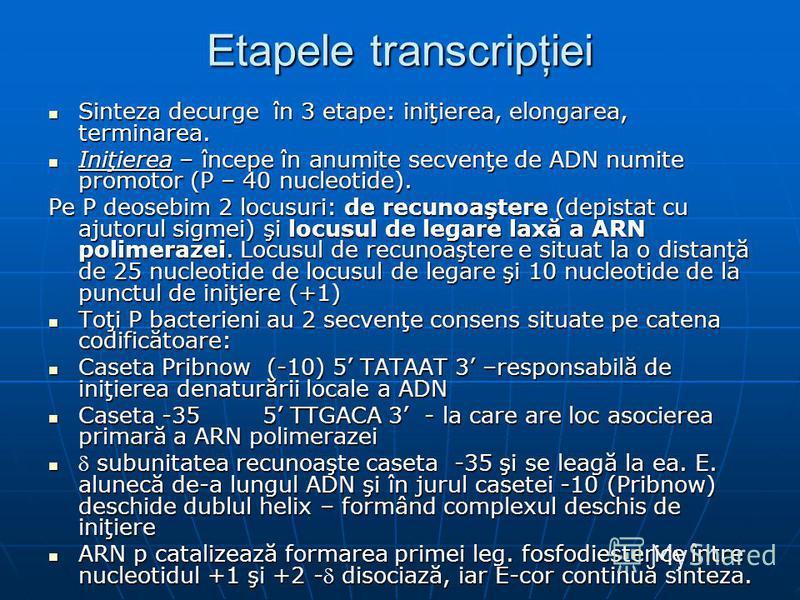 Etapele transcripţiei Sinteza decurge în 3 etape: iniţierea, elongarea, terminarea. Sinteza decurge în 3 etape: iniţierea, elongarea, terminarea. Iniţierea – începe în anumite secvenţe de ADN numite promotor (P – 40 nucleotide). Iniţierea – începe în