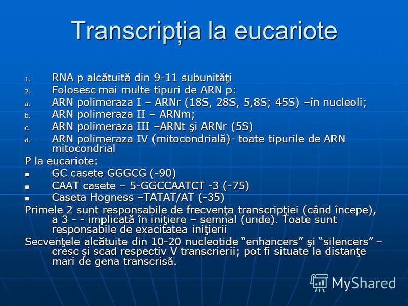 Transcripţia la eucariote 1. RNA p alcătuită din 9-11 subunităţi 2. Folosesc mai multe tipuri de ARN p: a. ARN polimeraza I – ARNr (18S, 28S, 5,8S; 45S) –în nucleoli; b. ARN polimeraza II – ARNm; c. ARN polimeraza III –ARNt şi ARNr (5S) d. ARN polime