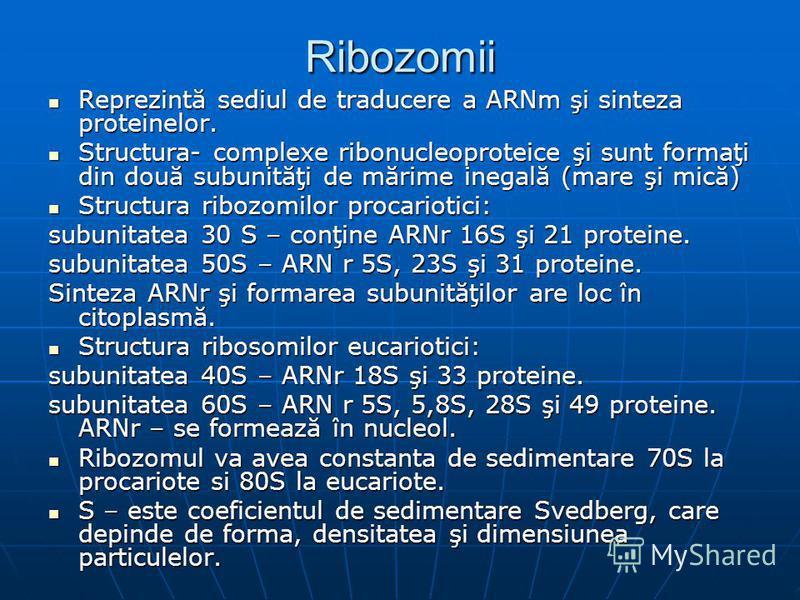 Ribozomii Reprezintă sediul de traducere a ARNm şi sinteza proteinelor. Reprezintă sediul de traducere a ARNm şi sinteza proteinelor. Structura- complexe ribonucleoproteice şi sunt formaţi din două subunităţi de mărime inegală (mare şi mică) Structur