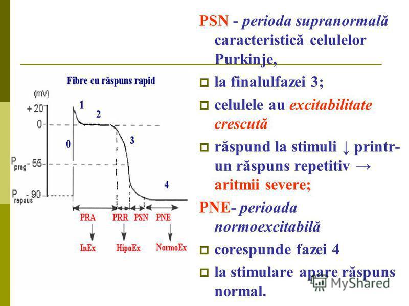 PSN - perioda supranormală caracteristică celulelor Purkinje, la finalulfazei 3; celulele au excitabilitate crescută răspund la stimuli printr- un răspuns repetitiv aritmii severe; PNE- perioada normoexcitabilă corespunde fazei 4 la stimulare apare r
