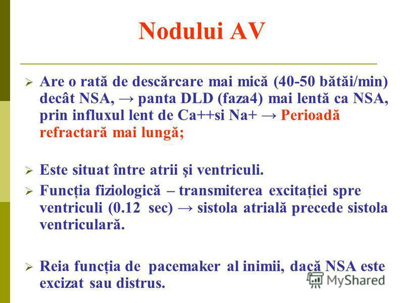 Nodului AV Are o rată de descărcare mai mică (40-50 bătăi/min) decât NSA, panta DLD (faza4) mai lentă ca NSA, prin influxul lent de Ca++si Na+ Perioadă refractară mai lungă; Este situat între atrii şi ventriculi. Funcţia fiziologică – transmiterea ex