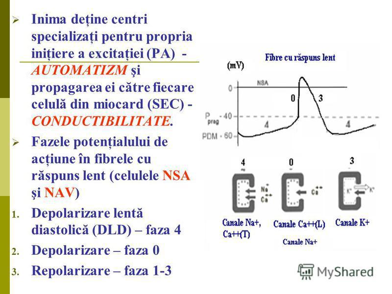 Inima deţine centri specializaţi pentru propria iniţiere a excitaţiei (PA) - AUTOMATIZM şi propagarea ei către fiecare celulă din miocard (SEC) - CONDUCTIBILITATE. Fazele potenţialului de acţiune în fibrele cu răspuns lent (celulele NSA şi NAV) 1. De