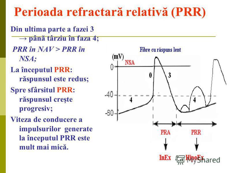 Perioada refractară relativă (PRR) Din ultima parte a fazei 3 până târziu în faza 4; PRR în NAV > PRR în NSA; La începutul PRR: răspunsul este redus; Spre sfârsitul PRR: răspunsul creşte progresiv; Viteza de conducere a impulsurilor generate la încep