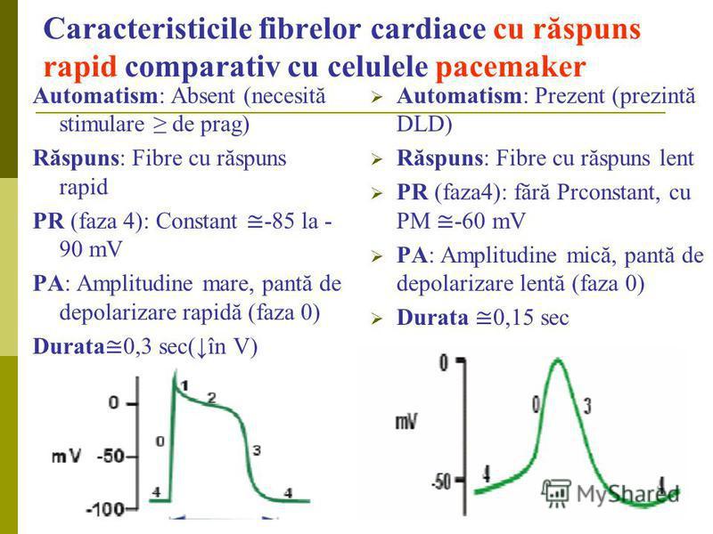 Caracteristicile fibrelor cardiace cu răspuns rapid comparativ cu celulele pacemaker Automatism: Absent (necesită stimulare de prag) Răspuns: Fibre cu răspuns rapid PR (faza 4): Constant -85 la - 90 mV PA: Amplitudine mare, pantă de depolarizare rapi