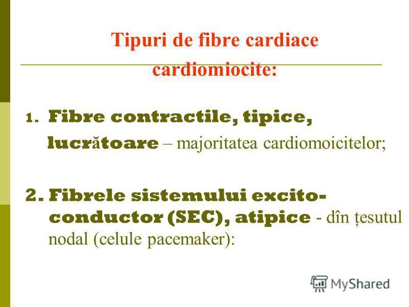 Tipuri de fibre cardiace cardiomiocite: 1. Fibre contractile, tipice, lucr ă toare – majoritatea cardiomoicitelor; 2. Fibrele sistemului excito- conductor (SEC), atipice - dîn ţesutul nodal (celule pacemaker):