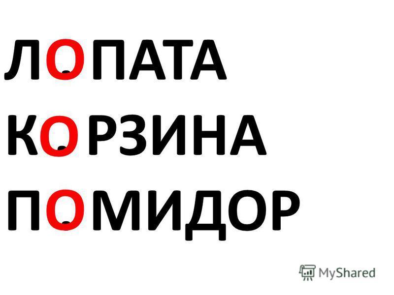 Л. ПАТА К. РЗИНА П. МИДОР О О О