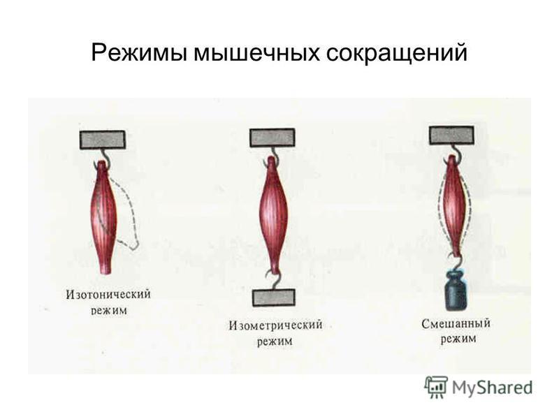 Режимы мышечных сокращений