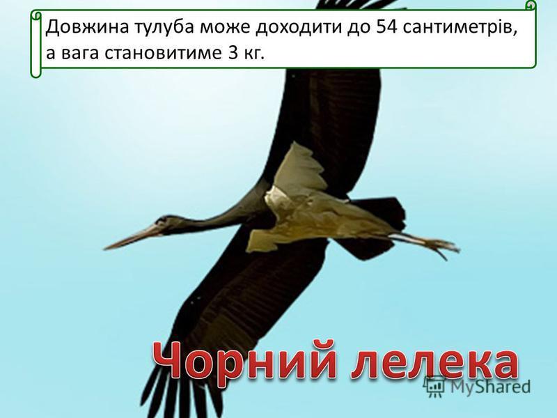 Довжина тулуба може доходити до 54 сантиметрів, а вага становитиме 3 кг.