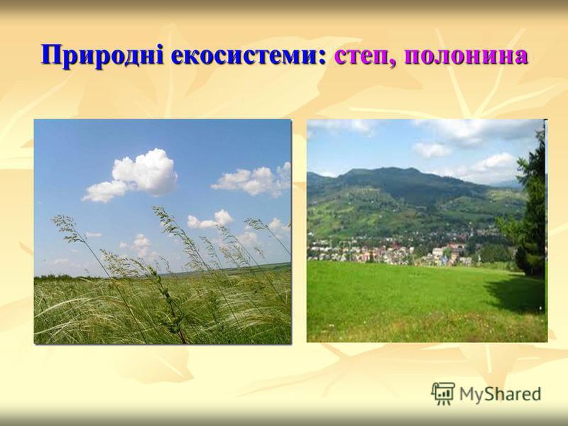 Природні екосистеми: степ, полонина